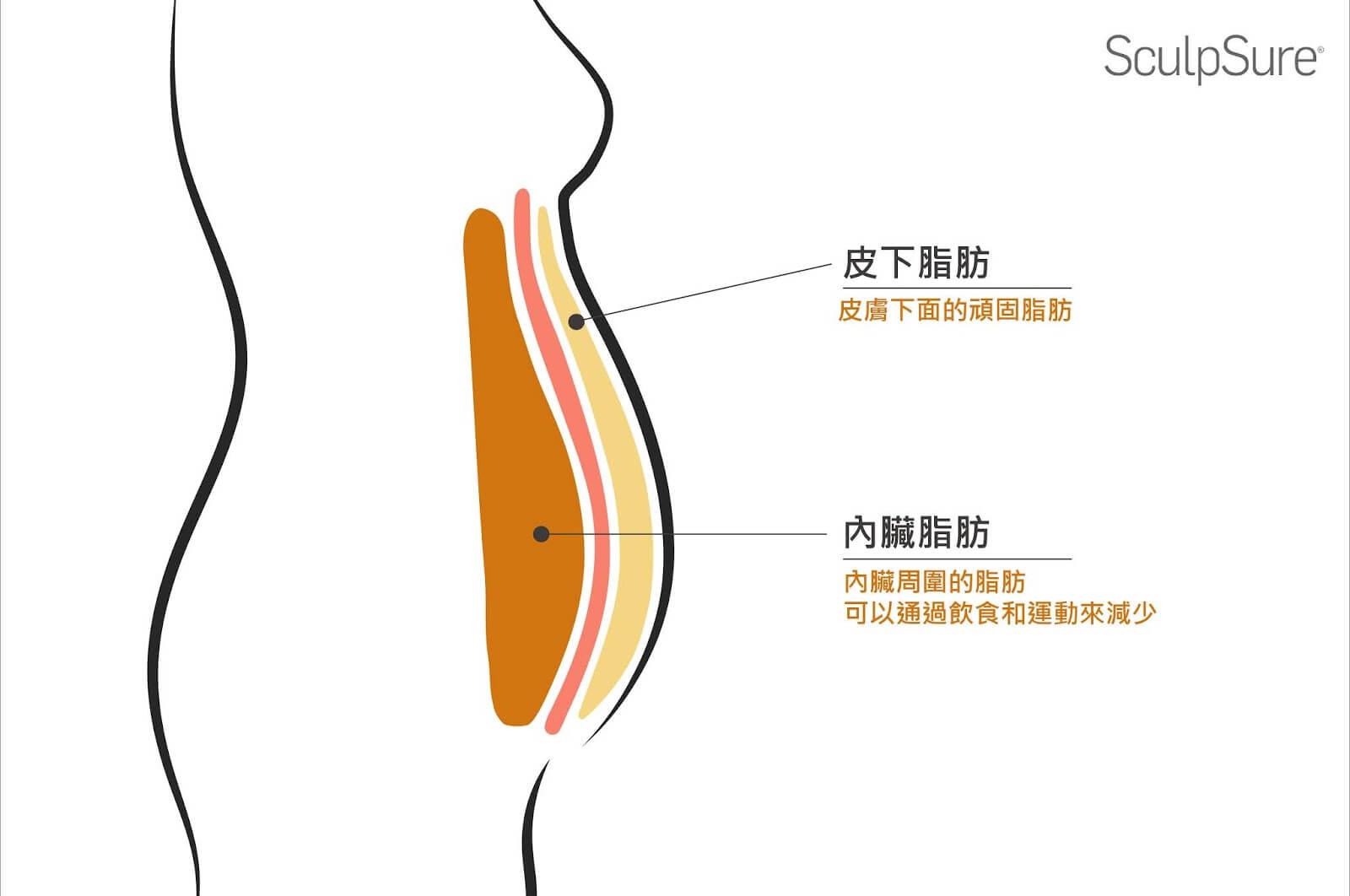 腹部脂肪位置說明